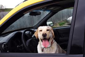 images-dog